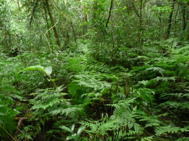 Madrugada Forest