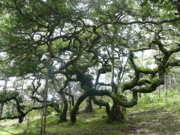 4-Disney Trees4